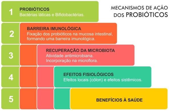 Mecanismo de ação dos probióticos